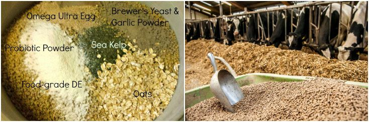 make complete feed pellets for cattle, cow, sheep and goat