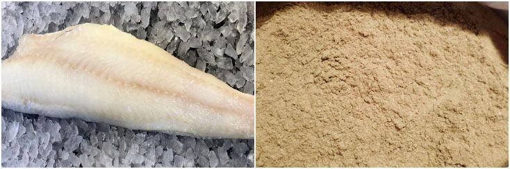 white fishmeal for feed processing industry